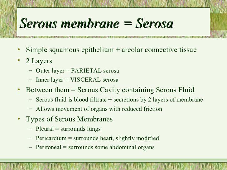 ... 3. Serous membrane ...