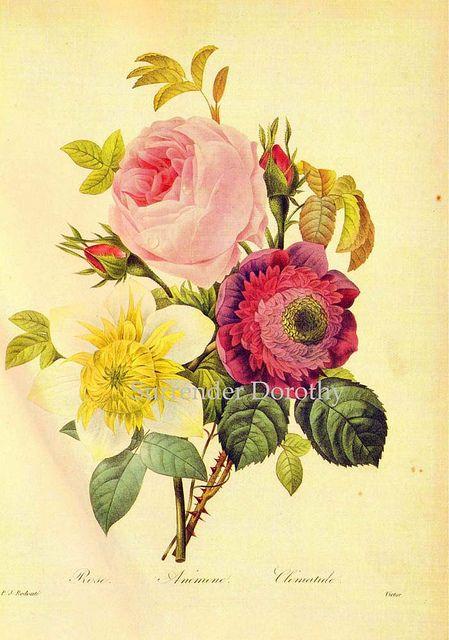 Rose Anemone Clematis Bouquet Redouté Botanical Illustration by SurrendrDorothy, via Flickr