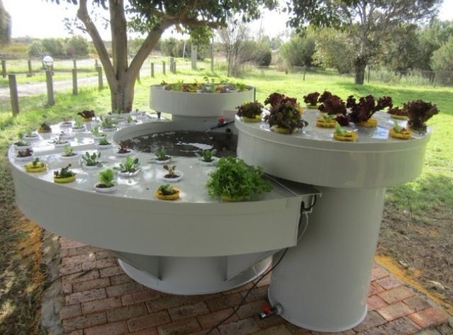 18 best images about garden aquaponics on pinterest for Hydroponic garden with fish