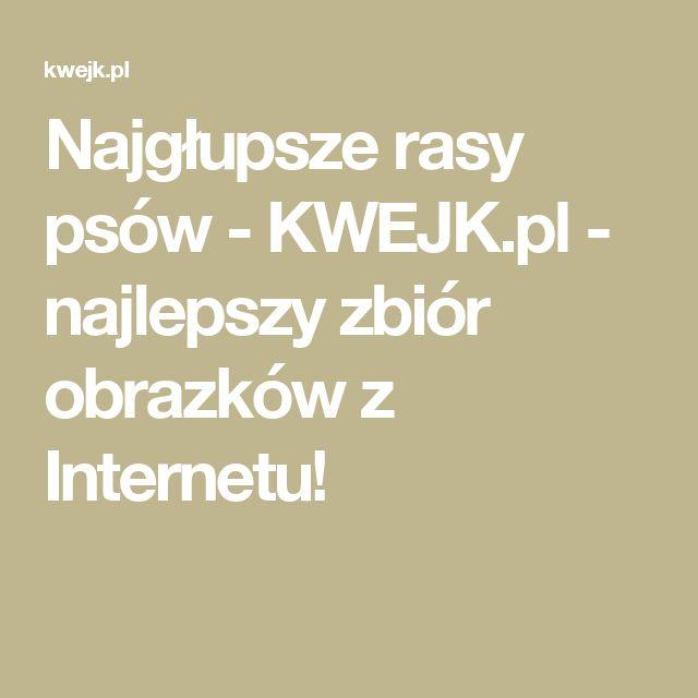 Najgłupsze rasy psów - KWEJK.pl - najlepszy zbiór obrazków z Internetu!