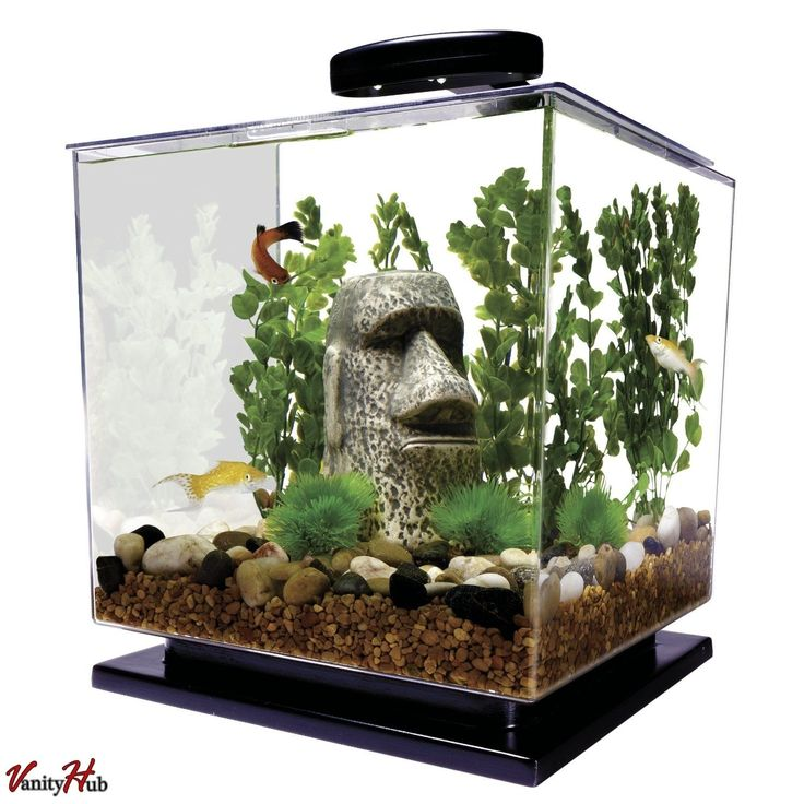 17 best ideas about small fish tanks on pinterest small for Betta fish tanks with filter