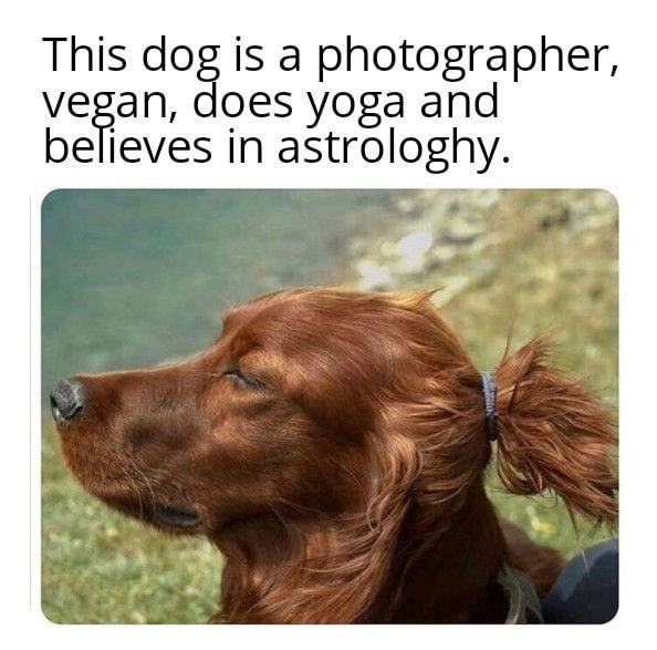 Dogs Of Today Dog Memes Animal Memes Funny Dogs Funny Animal Memes