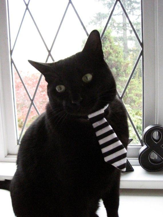 pet tie . snoop catty catt . $9.00