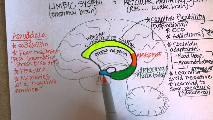 1000+ images about Brain Functions on Pinterest   Mental ... Limbic System System
