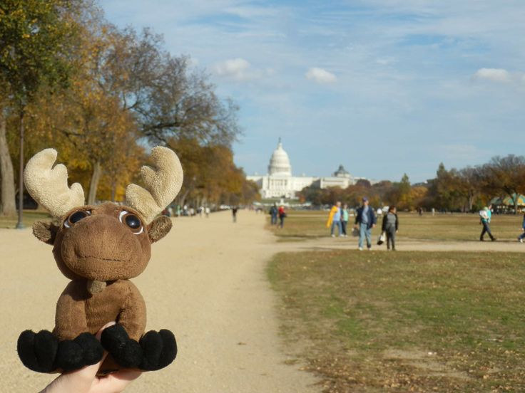 Mr. Moose at the Capitol in D. C.