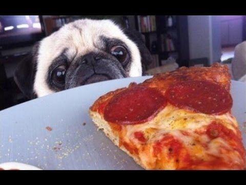 Grappige Honden Stelen Pizza. Compilatie 2015 [Nieuwe Hd] - YouTube