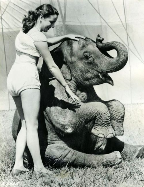 i wonder who started training elephants to do tricks in the circus
