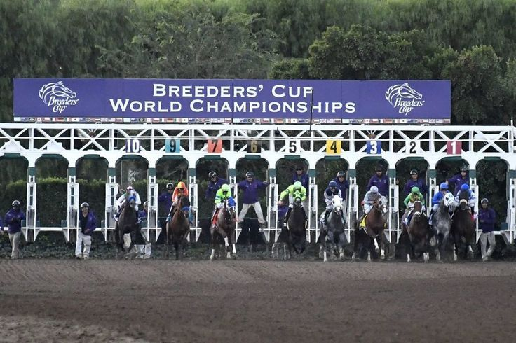 The #2017 #Breeders' #Cup #Live #Stream #Horse #Race will be held at Del Mar on Nov 3 and 4. Don't miss your chance to witness the world's greatest thoroughbreds at.  https://cup-breeders.net/