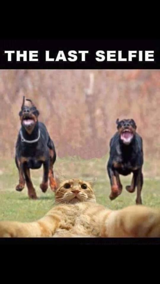 Funny Cat Last Selfie