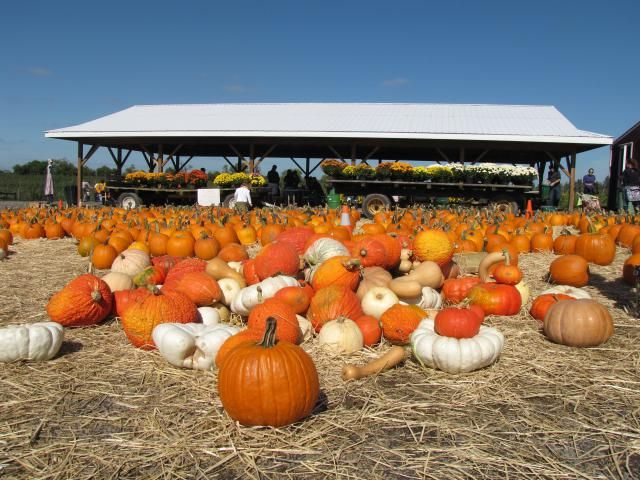 What to Do in October in Washington DC (Festivals and Events)