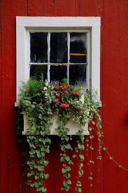 Rustic barn window looks beautiful with a window box of plants, Hudson, Wisconsin, USA