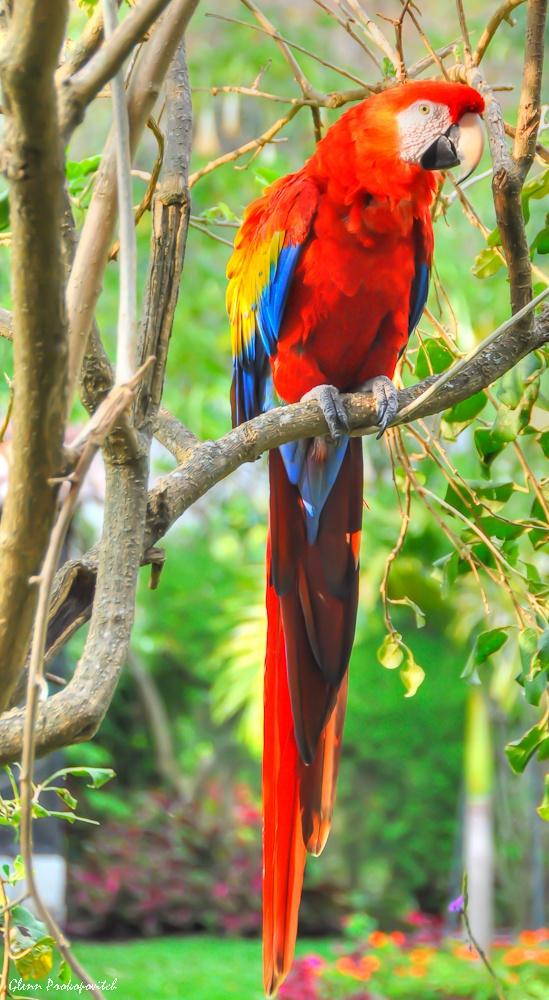 Cute Cockatiel Wallpaper Parrot Pics Parrot Birds Pet Birds