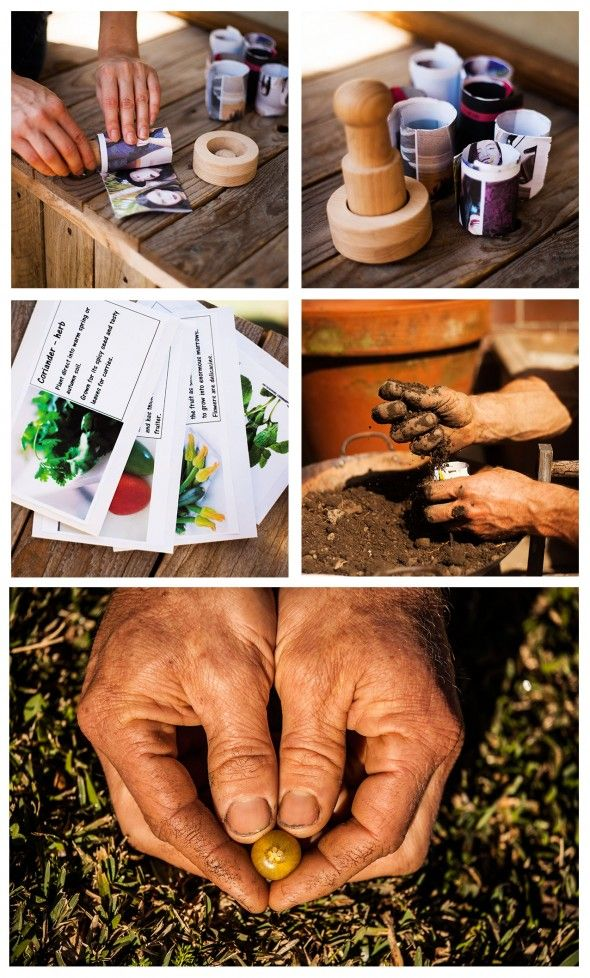 My garden: organic seeds planted in recycled newspaper pots to produce amazing food <3