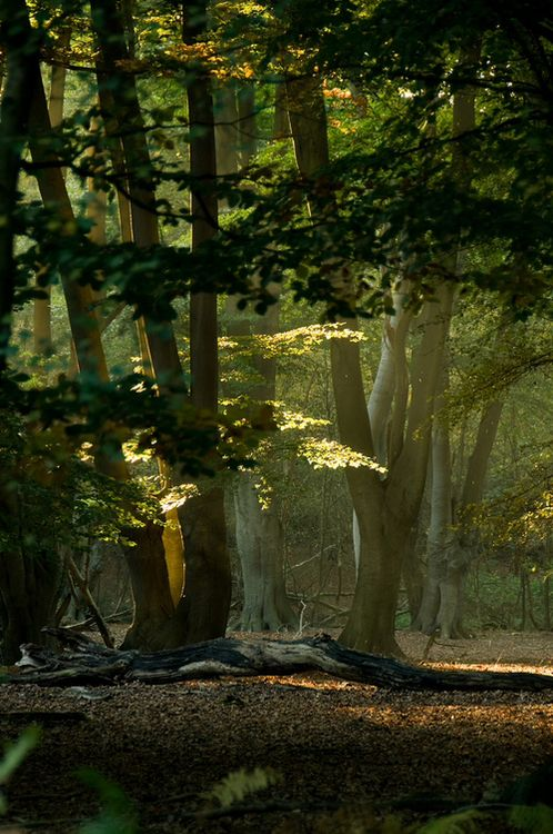 magical forest ....