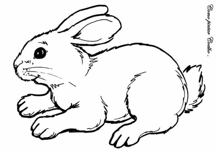 Pin Von Dulcineia Auf Coelhinhos Ausmalbilder Tiere Ausmalbild Hase Malvorlage Hase