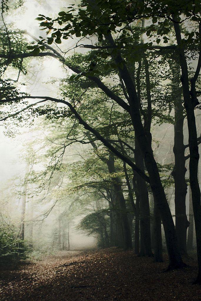 Haunted Forest || Bob van den berg | Feel | Heaven & Earth ...