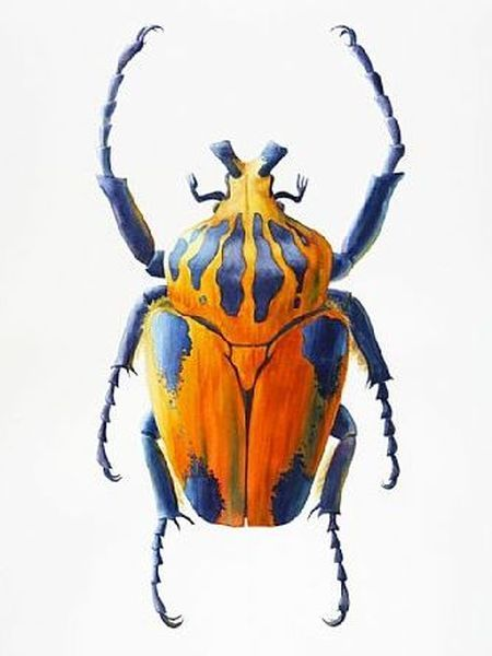 живописных красивые рисунки жуков первый выделяется