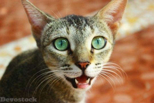 Devostock Cat Feline Pet Face 1 4k Cats Vet Costs Low Maintenance Pets