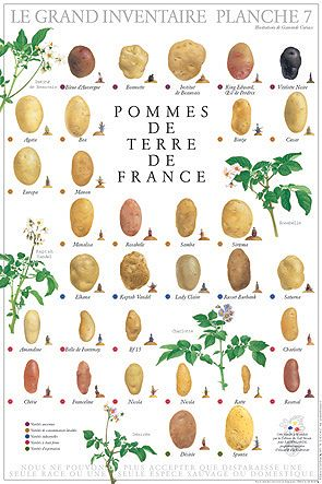 the potatoes of france -- food art illustration