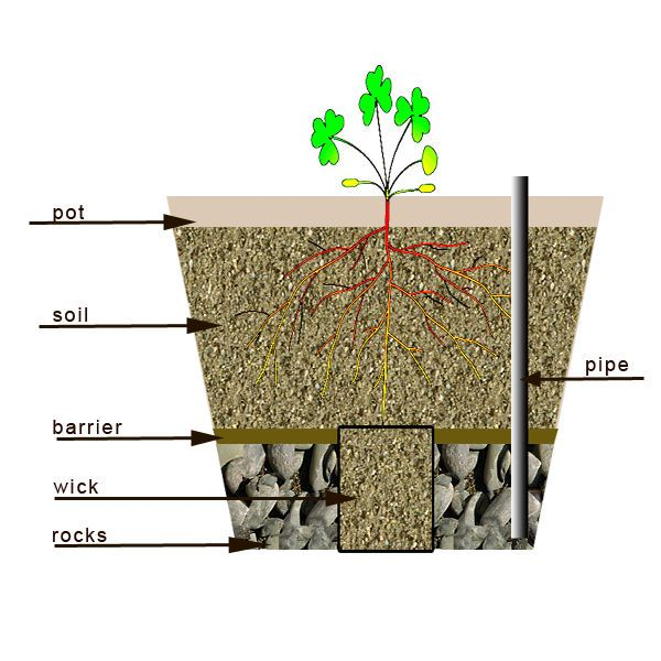 Picture of How to make a self watering container