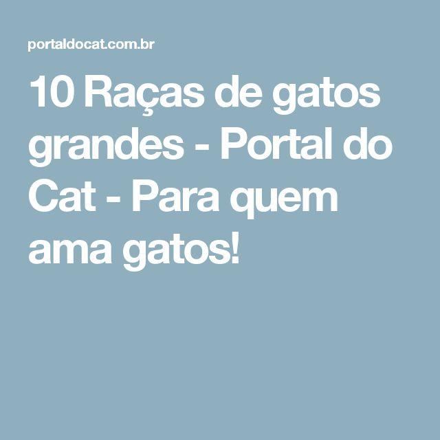10 Raças de gatos grandes - Portal do Cat - Para quem ama gatos!