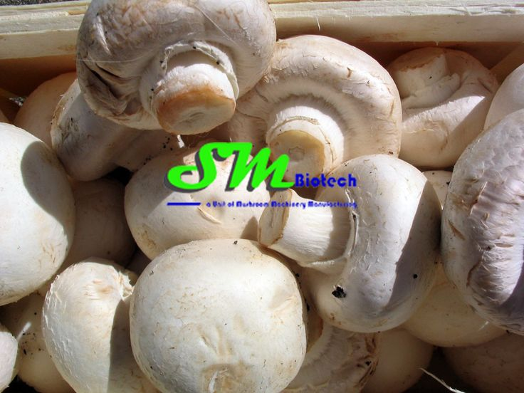 Shed Construction | Mushroom Plant Setup #ShedConstruction | #Mushroom Plant Setup Mushroom Machines is centrally placed in seven kilometre. Bhopa Road, Makhiyali  Muzaffarnagar,Uttar Pradesh -251001 as corporate office and that we have super provider in different states with representatives To more information please visit here :- http://www.mushroommachines.com/