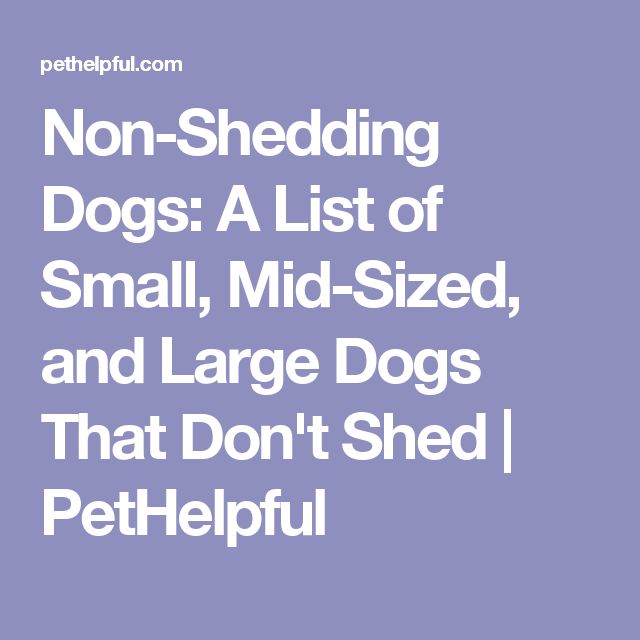 Non-Shedding Dogs: A List of Small, Mid-Sized, and Large Dogs That Don't Shed | PetHelpful