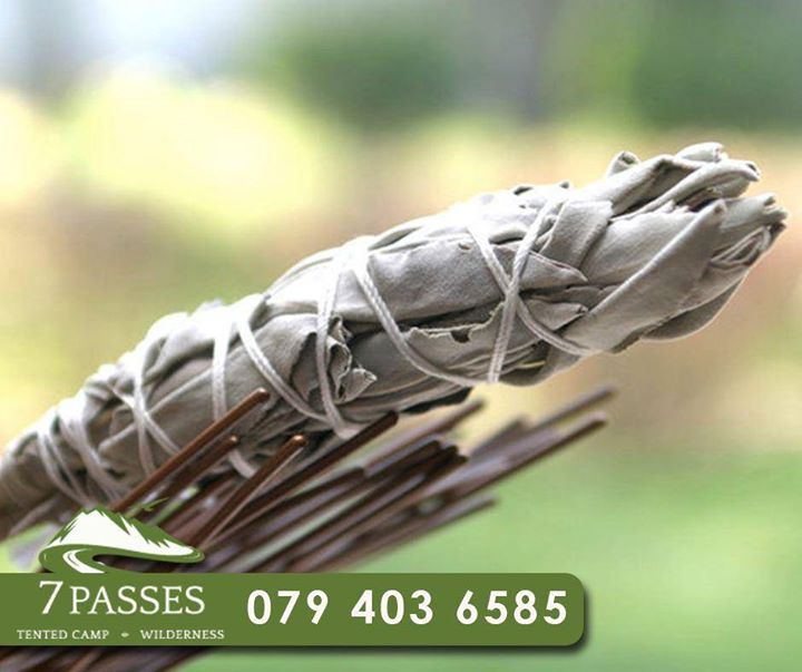 #TuesdayTip: Sage is a natural mosquito repellent. Throw some on the fire every now and then, and it should help keep them away. #7Passes