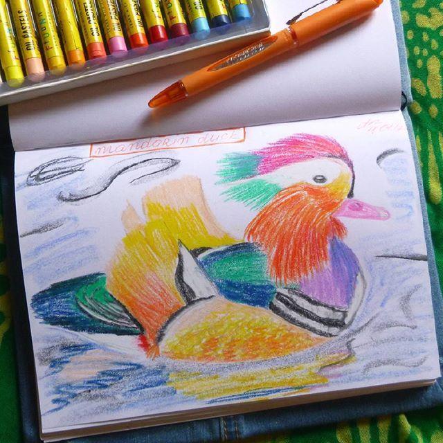 """Sketch. Mandrin duck Не слишком разбираюсь в растениях и птичках. Искала красочных птиц. Утка-мандаринка покорила мое сердце! Такая милашечка )) А еще они создают пары на всю жизнь и из-за того, что оперение самца и самки не похожи """"утками-мандаринками"""" в китайском называют странные парочки =) Ну прелесть же!  #Argunika #bird #animal #art #artist #sketchbook #duck #mandarinduck #mandarin #oil #pastel #sketch #oilpastel #растение #пастель #pen #draw #picture #nature #скетчбук #скетч #рисунок…"""