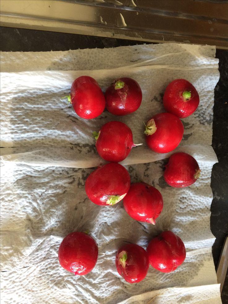 Noen av reddikene æ har sådd sjøl :) Nydelig god e dem :)