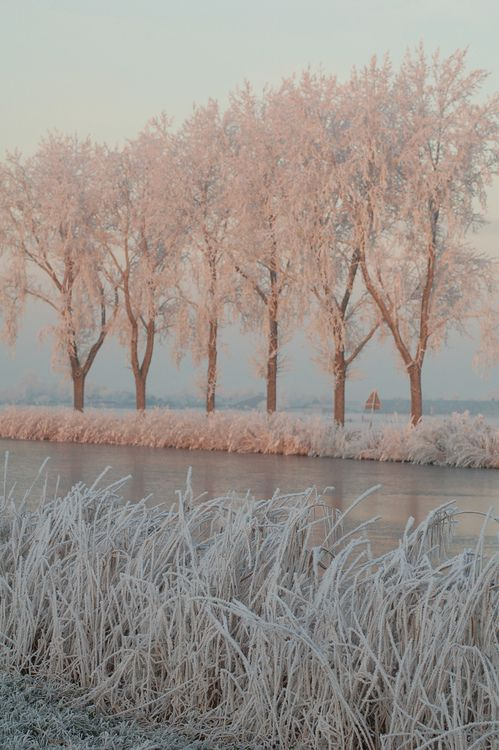 pink sunlight on frozen trees//