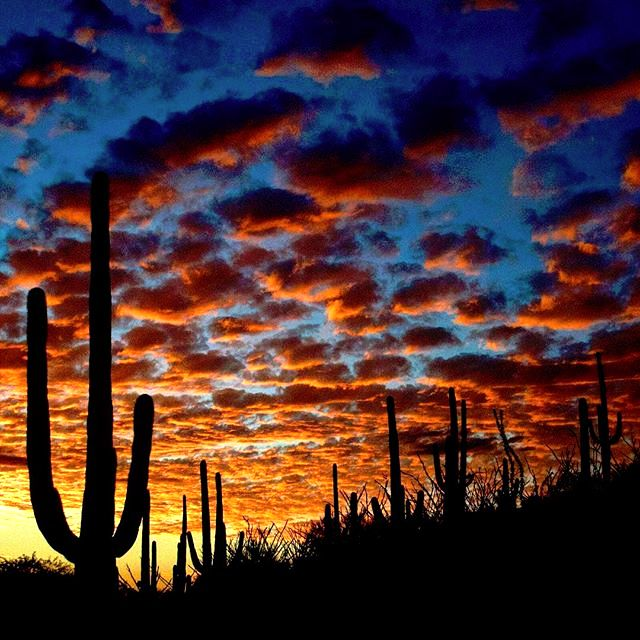 62 best sunsets in tucson arizona images on pinterest beautiful saguaros dancing in the beautiful sunset in tucson arizona photo via instagram by sciox Images