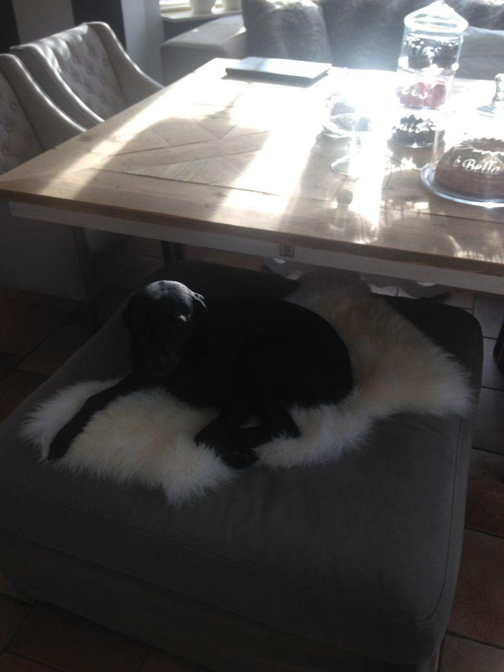 Lady's nieuwe favoriete plekje, op het Ikea schapenvachtje...