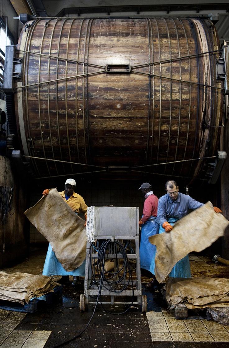 Cuoificio Alcyone, Santa Croce. Le pelli, dopo la fase di concia nei bottali, vengono estratte e impilate per l'asciugatura.