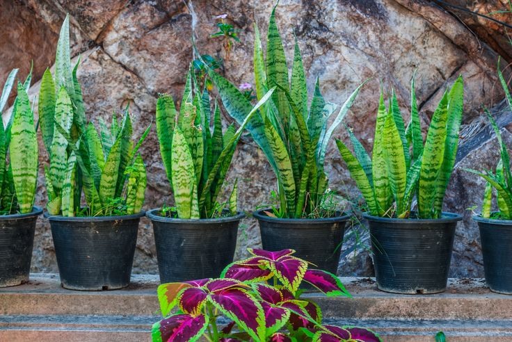 Wist jij al dat bepaalde planten de lucht in je kamer zuiveren? Nu wel!