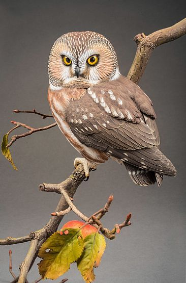 Northern Saw Whet Owl in My Apple Tree (View 2)-Northern Saw Whet OwlbyPatrickGodin