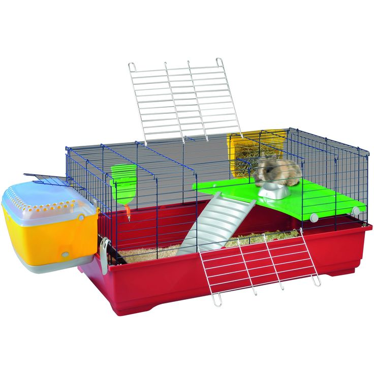 Best Guinea Pig Cage Guinea Pig Cage Next Day