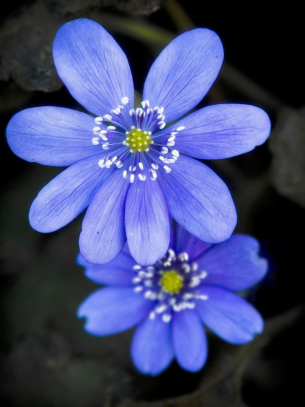 All About The Blue ... Flowers