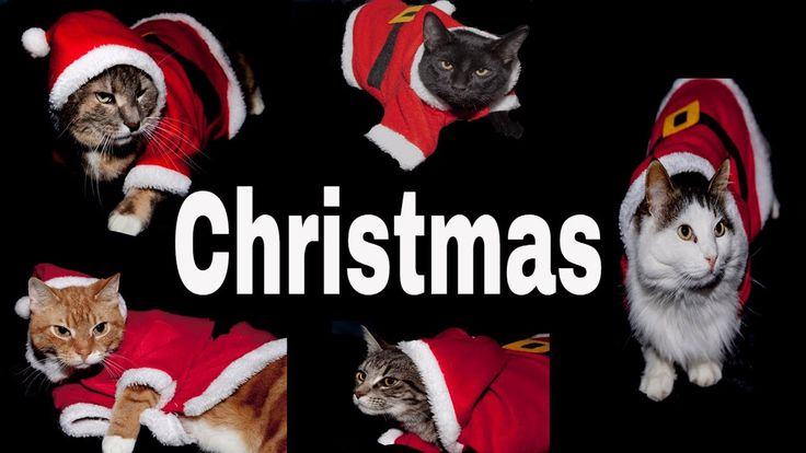Catnip Junkies // Gifts  // Cats Diary  // Christmas Cats In 360 VR