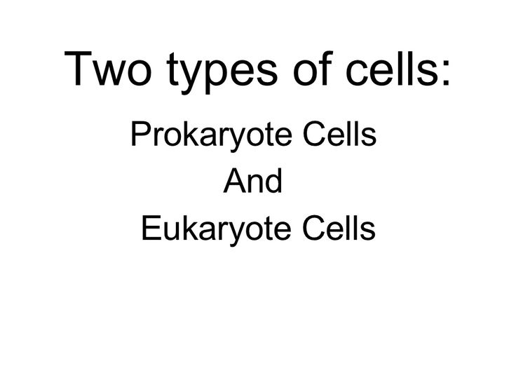 A thorough free presentation of comparing prokaryote and eukaryote cells.