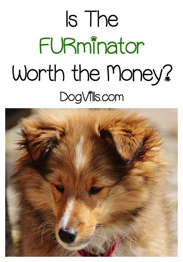 Dog Training Methods Free Dogtrainingrevolution Large Dog