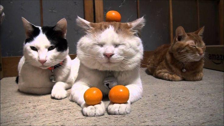 きんかん4 Kumquat
