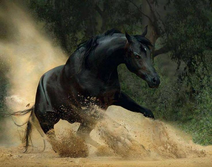 La gioia essenziale di stare con i cavalli è il mettersi a contatto con i rari elementi di grazia, bellezza, spirito e fuoco. (Sharon Ralls Lemon)