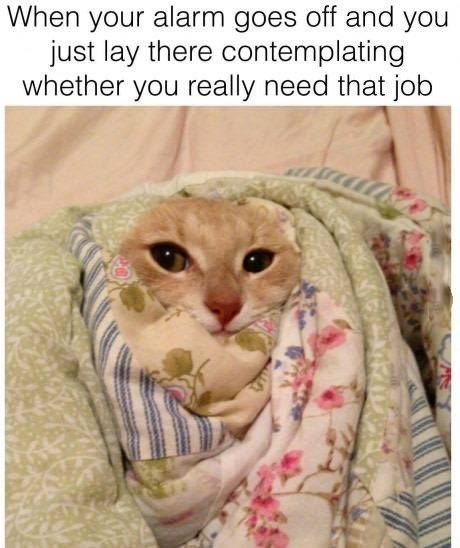 ♡ On Pinterest @ kitkatlovekesha ♡ ♡ Pin: Humor ~ When Your Alarm Goes Off & Contemplate Whether You Really Need That Job ♡
