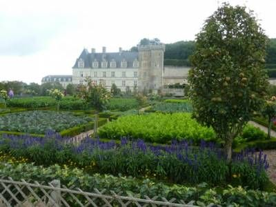 Hedges galore at Chateau de Villandry & Chenonceau in the Loire Valley - Gardeners Blog | Green Shutters | Evergreen Hedging