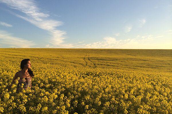yellow flower fields, South Africa