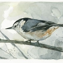 I really need to watercolor my nuthatch into my nature journal.