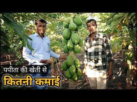 पपीता की खेती से कितनी कमाई | How much profit