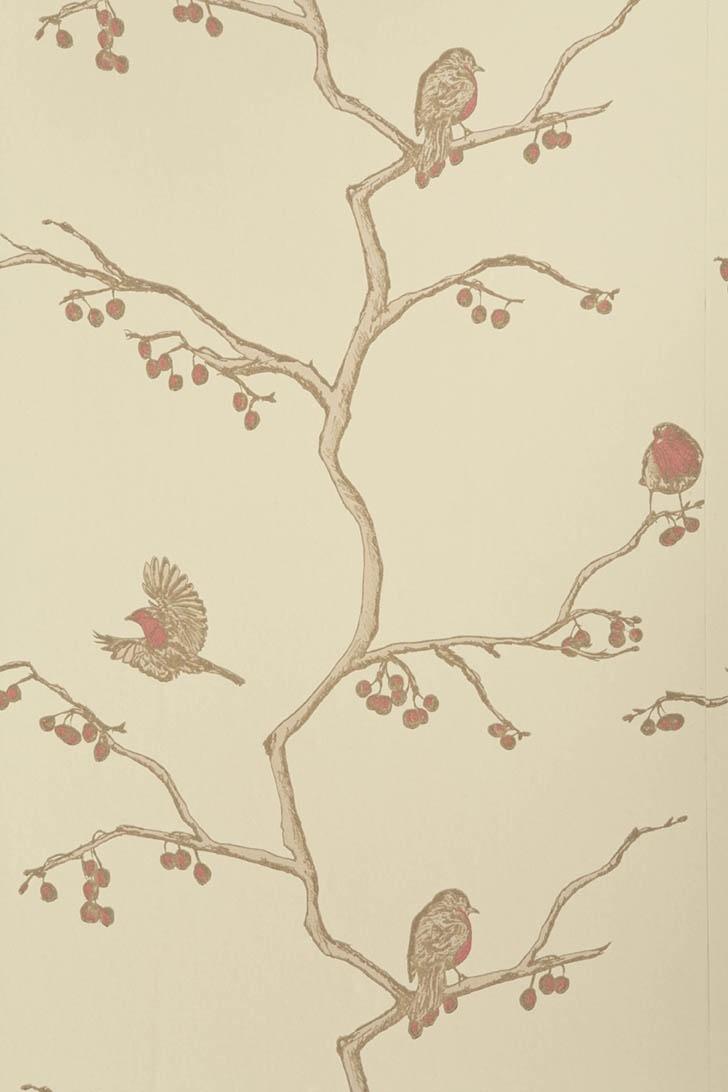 50 Best Bird Wallpaper Images On Pinterest Bird Wallpaper