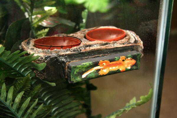 DIY gecko food bowl ledge.